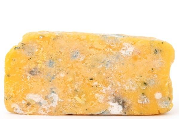 Zehirli gıdalar casu marzu